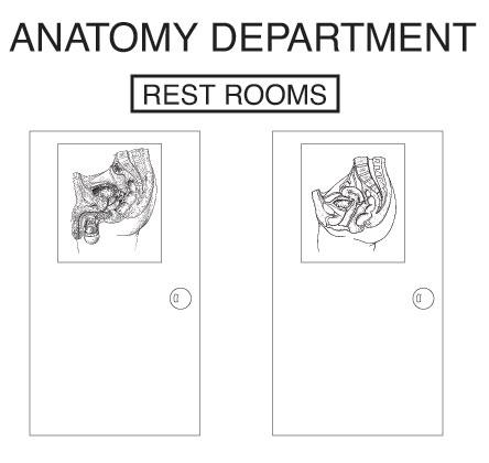 How To Study Anatomy Medmaster