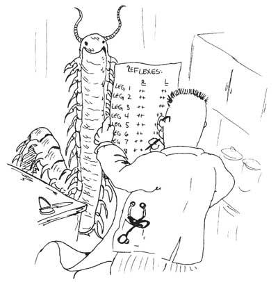 How To Study Neuroanatomy